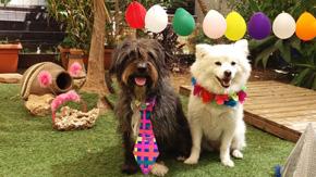דליצ'יס - כלבים ומשחקים