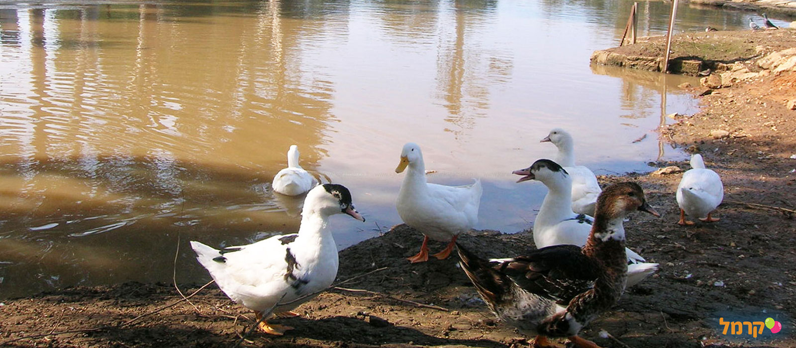 אגם הפארק - 073-7025116