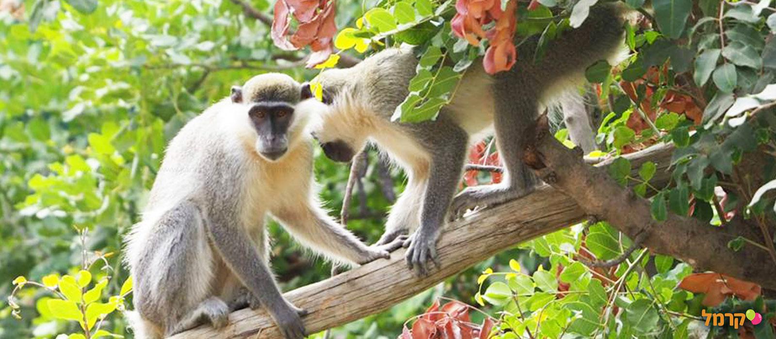 פארק הקופים - 073-7026321